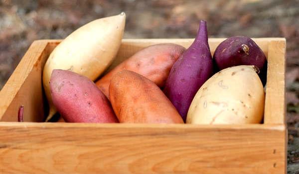 Batata doce diferentes cores