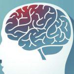 Uma Fruta Poderosa Pode Proteger o seu Cérebro do Envelhecimento