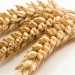 Alergia a Glúten - Sintomas e O Que Pode Comer