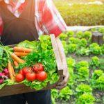 Alimentos Orgânicos - O Que São, Benefícios, Tipos e Dicas