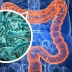 O Que Ajuda sua Microbiota Intestinal?