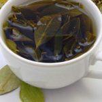 Chá de Folha de Abacate Emagrece? Para Que Serve?