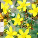 Antidepressivos Fitoterápicos Mais Usados