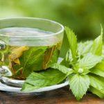 Chá de Mastruz - Para Que Serve e Como Fazer