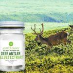 Deer Antler Velvet - O Que é, Para Que Serve, Efeitos Colaterais e Como Usar