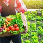 10 Alimentos que Você Deveria Considerar Comprar Orgânicos
