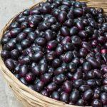 5 Benefícios da Fruta Jamelão - Para Que Serve e Propriedades