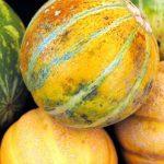 Tipos de Melão - Como Escolher, Calorias e Propriedades