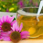 10 Benefícios da Equinacea - Para Que Serve e Efeitos Colaterais
