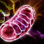 Estresse Oxidativo - O Que é, Causas e O Que Fazer