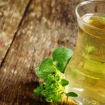Chá de Orégano Emagrece Mesmo?