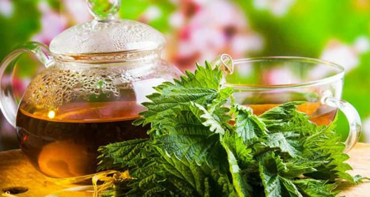 Chá para os rins