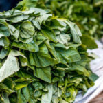 5 Benefícios da Folha de Abóbora - Para Que Serve, Chá, Receitas e Dicas
