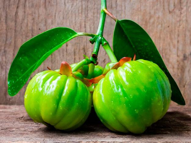 Fruta garcnia cambogia